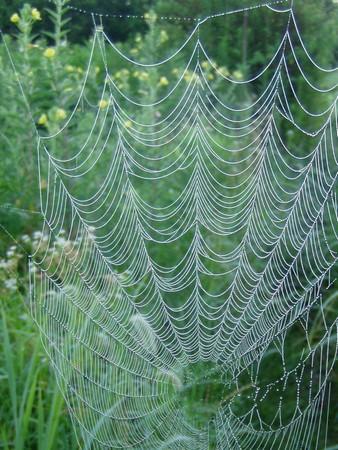 20120803spiderweb.jpg