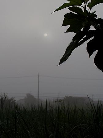 20120807morning.jpg