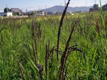 20120924midorimai.jpg
