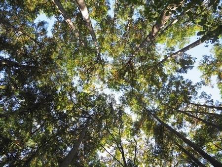 20210126deepforest.jpg